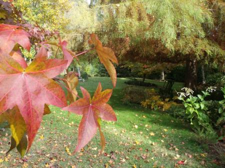 l'automne 2011