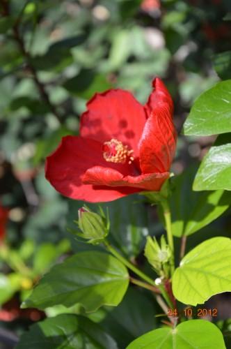 automne,troc2012,Mouleydier,serre 067.JPG
