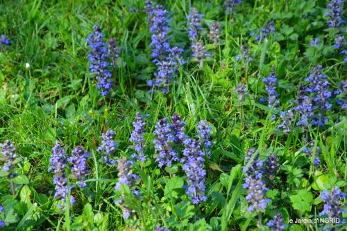 colline,orchidée,nature,jardin fleuri 042.JPG