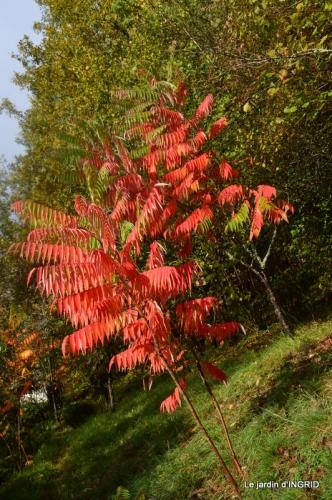feuillages d'automne et tonte de la pelouse 004.JPG