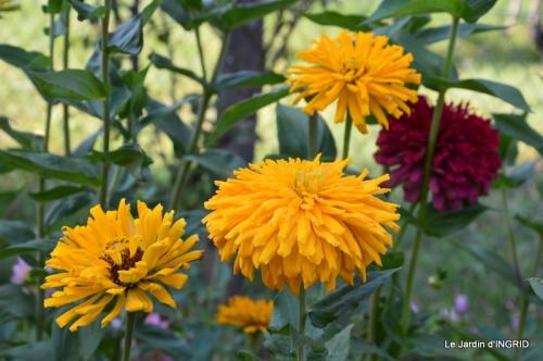 jardin Mme Perichou,grandes fleurs,bouquet,jardin 002.JPG