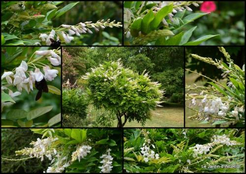 2015-07-19 dahlias,jardin,puces st Avit Seigneur,Paniers Issigeac,Romane.jpg