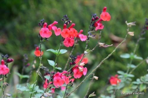 jardin ,bouquet 045.JPG