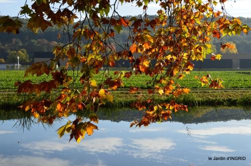 jardin automne,voisinage,canal 055.JPG