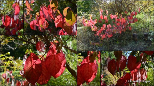 2014-10-12 fuschias,criquet,pluie,St Mayme de Peyreyrol,copines1.jpg