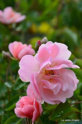 jardin,roses,cabane 007.JPG