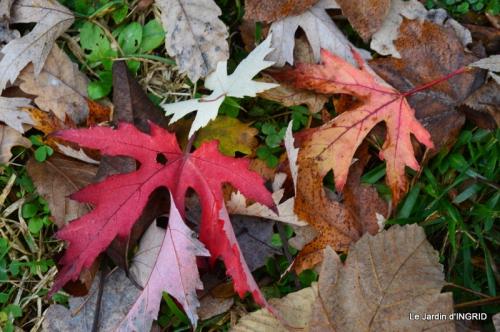 Romefort,bord de Creuse,vent,feuilles,jardin,canal 163.JPG