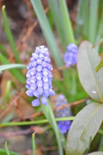 bouvreuils,chatons,fleurettes,pluie,orchidee,écureuil,vues du ja 043.JPG