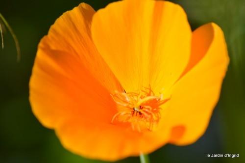 coeur des fleurs,papillons,libellules 165.JPG