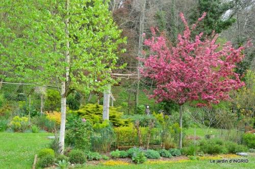 jardin confiné ,osier,magnolia jaune 042.JPG