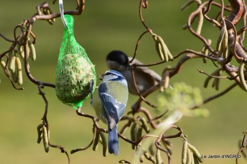 les oiseaux ,2 partie 020.JPG