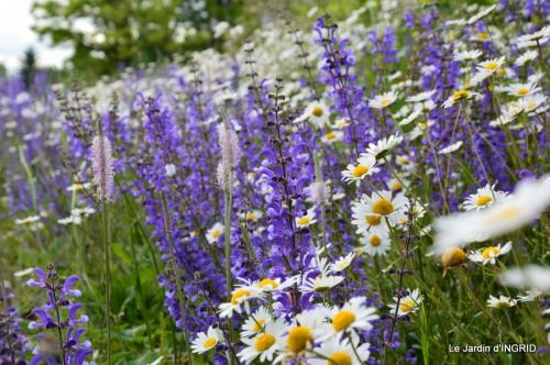 canal,fleurs blanches,marguerites,LE FLEIX,osier 023.JPG