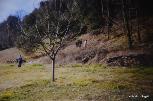 jardin,le cypres chauve,puces Mouleydier,vieilles photos 136.JPG