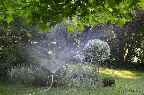 jardin,gléditzia,fleurs Beaumont,pavot ,lys,orchidée 002.JPG