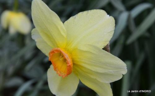 jardin (3 semaine de mars) 021.JPG