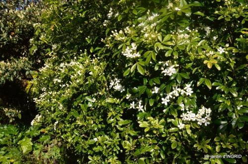 geais,jardin,printemps 064.JPG
