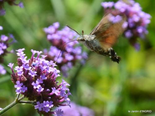 jardin,papillons,Cadouin,légumes,Sophie, 167-001.JPG