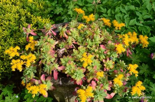 première roses,achats,jardin blanc 019.JPG