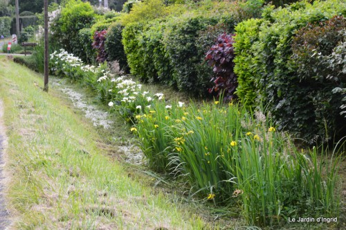 canal,fleurs blanches,marguerites,LE FLEIX,osier 079.JPG