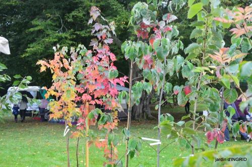 Neuvic,jardin,champignons canal 136.JPG