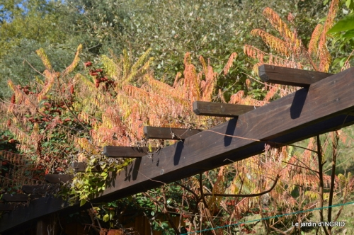 sauges,bouleau,coucher de soleil,érables,automne 005.JPG