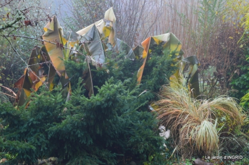 Brouillard,cypres chauve,jardinage 006.JPG