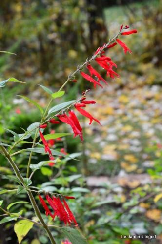 jardin serre bucher automne 014.JPG