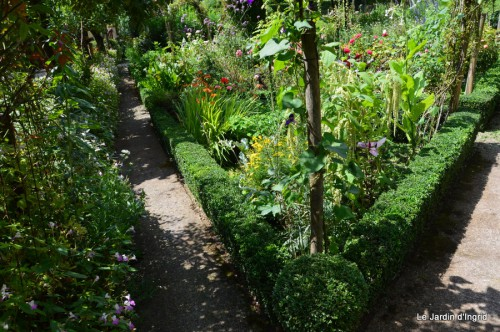 jardin,petit jardin,nénuphard,papillons 046.JPG