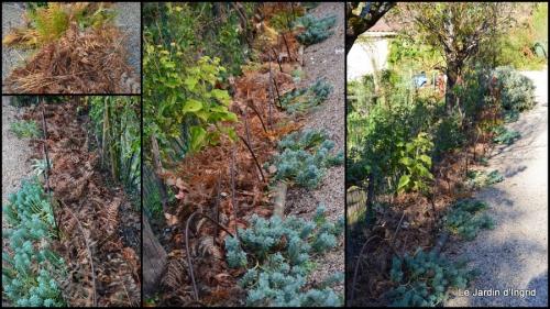 2014-11-21 jardin et travaux d'automne2.jpg