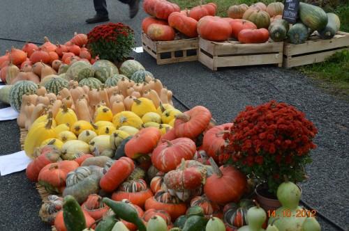 champignons,citrouilles,st Mayme de Péreyrol,fuschias,jardin aut 070.JPG