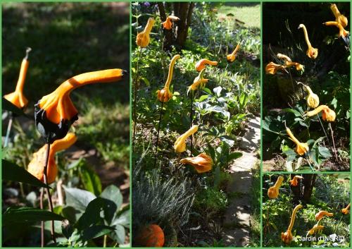 2016-10-07 cygnes,jardin,apres la tonte2.JPG