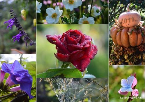 2017-09-29 canal dentelles,Nernadette,fleurettes,apres tonte2.jpg