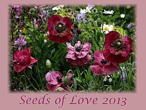 Seeds-of-Love-2013-logo.jpg
