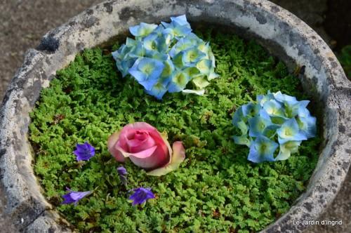 fleurs bleues,hortensia bleu,moi bébé 023.JPG