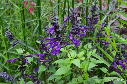 jardin,chez Bernadette,puces,cygnes,pluie 110.JPG