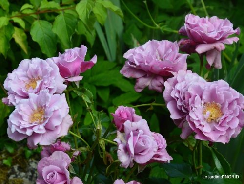 roses,visiteuses,Sophie 012.JPG