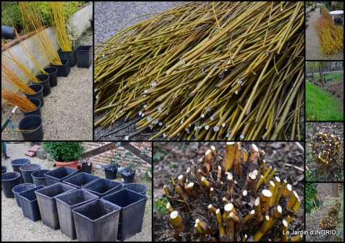 2015-03-28 jardin (3 semaine de mars).jpg
