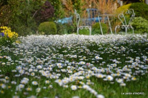 jardin printemps 004.JPG