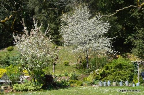 cygnes,osier ,printemps,jardiland 064.JPG