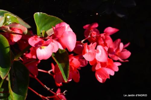 insectes,fleurs,land art,Couze,chateau de Banes,Lalinde,Monsac 242.JPG