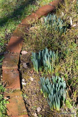tulipes,crocus ,jardin 033.JPG