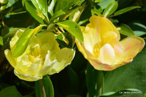 jardin printemps 018.JPG