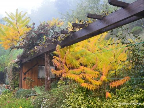 brouillard le matin d'automne 057.JPG
