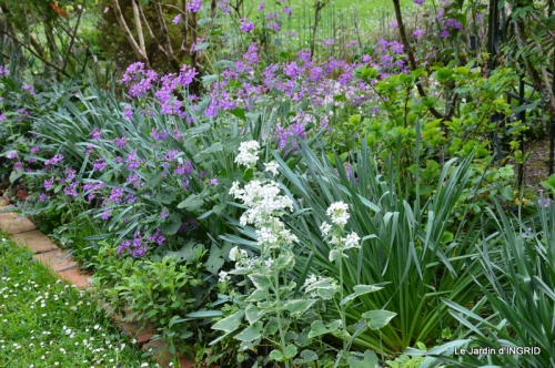 jardin avril,tulipes pivoine,iris d'eau,chenilles 068.JPG