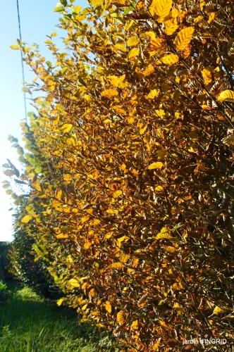 fin de l'automne,Lalinde,bouquet de l'avent 041.JPG
