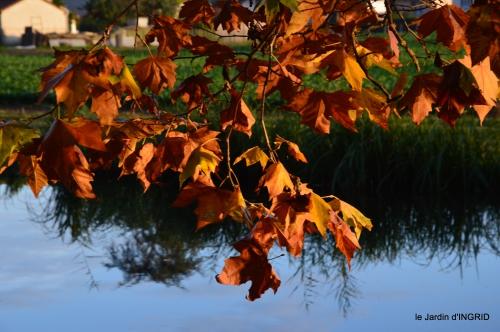 jardin automne,voisinage,canal 083.JPG