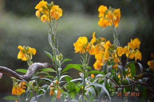 mésanges, nid frelons,fleurs décembre 072.JPG