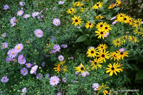 dahlias,massifs refaits,Lalinde,jardin 086.JPG