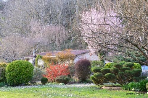 primevères ,jardin 039.JPG