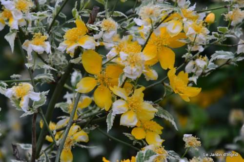 géraniums,glycine Monpazier,cabane,arums,fleurs sauvages 122.JPG